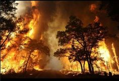 """""""A wildfire burns out of control beside a road near Bastrop State Park, Texas, Sept. Discovery Channel, Bastrop Fire, Bastrop State Park, Bastrop Texas, Fire Tornado, Dramatic Photos, Wildland Firefighter, Year Of The Horse, Wild Fire"""