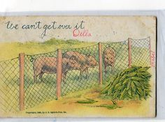 Pigs  antique postcard, undivided, We can't get over it, Pigs vintage postcard by sharonfostervintage on Etsy
