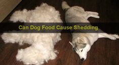 Can Dog Food Cause Shedding Best Dog Food, Best Dogs, Tick Removal Dog, Dog Rash, Cat Skin, Canned Dog Food, Chihuahua Dogs, Fleas, Chihuahuas