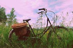 Bike in field + purple sunset = romantic evening picnic