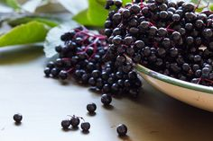 The Elderberry Sambucus canadensis (sam- BEW-kus kan-uh-DEN-sis), is a powerhouse fruit high in nutrients great for boosting the immune system and more. A native shrub to North America, growing wild in the northeast and northwestern states, the ripened berries are a deep purple-tinged black, held clustered by a lovely contrasting violet colored stem. The Elderberry shrub is increasingly cultivated as edible hedges,((). Landscaped into permaculture yards as a common ornamental shrub…