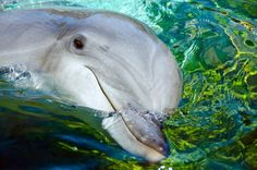 i just LOVE dolphins