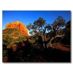 Courthouse Butte and a cypress tree, Sedona, Arizo Post Cards