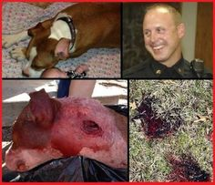 PLEASE PLEASE SIGN and SHARE!!!! POOR CALI DIED FOR NO REASON !!!!! Just because a police officer want to kill her.... Quick links to share the petition: Justice for Cali! Fire Ardmore police officer for destroying defenseless dog for no reason! | Yousign.org