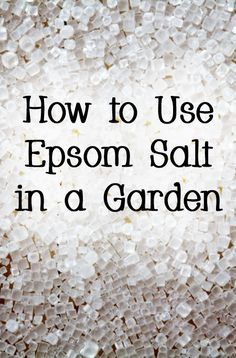 Tomato Plants Epsom salt can make your plants bloom more often, be greener, and be healthier. - How to Use Epsom Salt in a Garden Epsom Salt For Plants, Epsom Salt Uses, Epsom Salt For Grass, Epsom Salt In Garden, Epsom Salt Tomato Plants, Epsom Salt For Tomatoes, Garden Yard Ideas, Lawn And Garden, Summer Garden