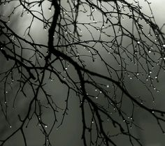 Winter rain - ready to freeze on the branches
