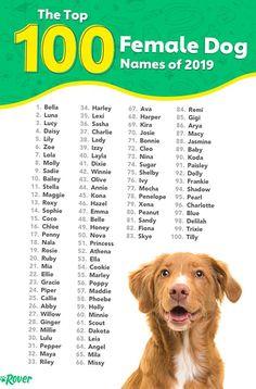 Most Popular Dog Names, Best Dog Names, Cat Names, Popular Female Dog Names, Top Dog Names, Top Female Dog Names, Puppies Names Female, Names For Puppies, Female Puppy Names Unique