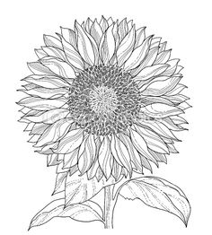 Sunflower Sketch I'm going to work on for my friend Surain
