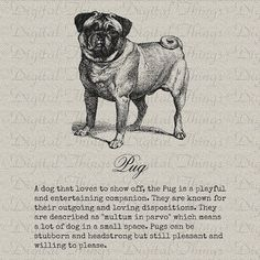 Pug Dog Art Pet Art Definition Art Wall Decor Art by DigitalThings Black Pug Puppies, Dogs And Puppies, Images Of Pugs, Pug Mug, Pugs And Kisses, Cute Pugs, Funny Pugs, Pug Love, Dog Art
