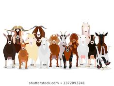 Find Various Goats Group stock images in HD and millions of other royalty-free stock photos, illustrations and vectors in the Shutterstock collection. Canvas Paper, Canvas Fabric, Canvas Wall Art, Free Vector Graphics, Vector Art, Goat Art, Watercolor Lettering, Fabric Wall Art, Animal Paintings