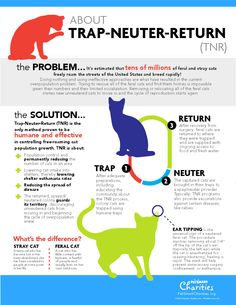 The Trap Neuter Return (TNR) Program.     The feral cat problem..... It is estimated that tens of millions of feral and stray cats freely roam the streets of the United States and breed rapidly!