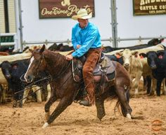 SMOOTH AS HOUSTON - 2012 Sorrel Mare with $19,451 in NCHA Lifetime Earnings     Sire:  Smooth As A Cat   Dam : Bet On Houston     2015 West Texas Futurity Open Finalist    2015 Cotton Stakes Open Futurity Finalist scored a 219 was 2nd in in the 1st go    2015 Brazos Bash Open Futurity Finalist scored a 220 and had the top score in the 1st go.   Scored a 73.5 in the Youth at Hamilton late January 2016    She is extremely sound and very consistant, gives 100% every time.       For m...
