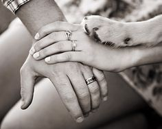 Hands of couple with dogs paw