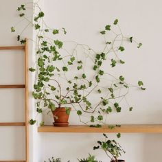 ✨shop plant vibes ✨🌿 do you remember this geranium that I decided not to prune ? He's so much more impressive in person 🌿check out my stories to see when he was smaller 😆 Indoor Climbing Plants, Indoor Plants, Diy Hanging, Hanging Plants, Wall Trellis, Instagram 4, Storage Design, Mason Jar Crafts, Geraniums