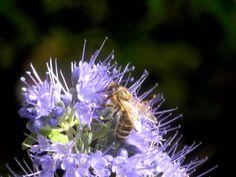 Bienenfreund mit Biene DSCN0475