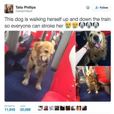 This social butterfly. | 19 Times Dogs Were The Gift The Internet Didn't Deserve