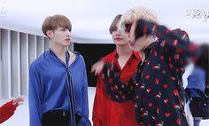 BTS Maknae Line Jimin Taehyung and Jungkook gif Taehyung, Jungkook V, Bts Bangtan Boy, Seokjin, Namjoon, Hoseok, Jikook, Bts Maknae Line, Wattpad