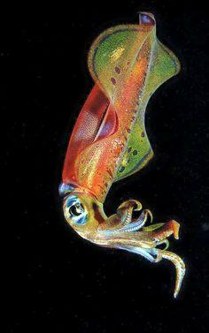 sea life - sea life photography - sea life underwater - sea life artwork - sea life watercolor sea l Beautiful Sea Creatures, Deep Sea Creatures, Underwater Sea, Underwater Creatures, Beneath The Sea, Under The Sea, Watercolor Sea, Unusual Animals, Ocean Life