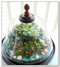 Unusual Glass Containers For Terrariums Part 32