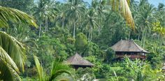 Bali Eco Stay mountain accommodation - Bali Eco Stay