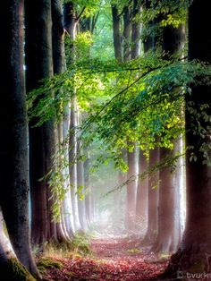 A peaceful forest path, on which to walk, and imagine times of long ago.