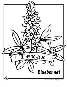 State Flower Coloring Pages Texas State Flower Coloring Page – Classroom Jr.