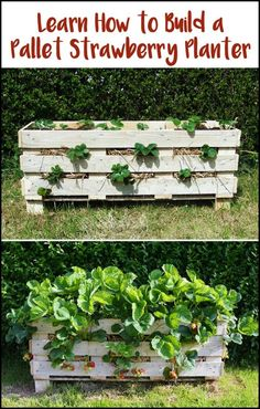 Building This Simple And Inexpensive Planter is a Great Way to Start Growing Your Own Strawberries