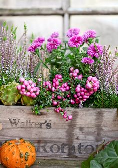 8 x hehkuvat syyskukat | Meillä kotona Rustic Gardens, Outdoor Gardens, Autumn Inspiration, Garden Inspiration, Container Plants, Container Gardening, Dream Garden, Home And Garden, Fall Containers