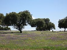Dehesa – Wikipedia Extremadura