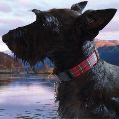 Mrs. Bones Decorative Dog Collars - MacGregor, $38.00…