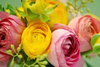Colorful Ranunculus Flowers images