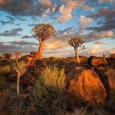Two Friends. Quiver Tree Forest, Keetmanshoop, Namibia by Hougaard Malan