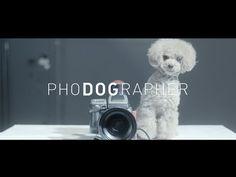 PhoDOGrapher もしも愛犬があなたの写真を撮ったら?