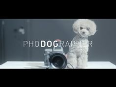 PhoDOGrapher,  What if you were photographed by your loved dog? It's so cute, it makes you cry.