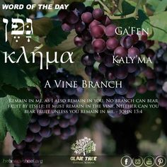 Hebrew Word of the Day. A Vine Branch by Olive Tree Hebraic School # & Hebrew Word Sukkah - Tent by Olive Tree Hebraic School #OTHS ...