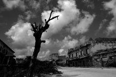 Non riuscivo a scorgere nient'altro, se non alberi morti, bruciati. Come scheletri sofferenti, allungavano i loro rami verso un cielo che non li avrebbe accolti. E gli alberi diventavano neri, neri, bruciati, neri. Continuavo a guardarli, convinto che fossero morti, ma pulsavano, brulicavano, vivevano. Come dei tubi cavi che succhiavano linfa rossa dal cielo al terreno, linfa mortale che produceva crolli, fosse rivoltate e carcasse di cani. - #ZagrebRomanzo