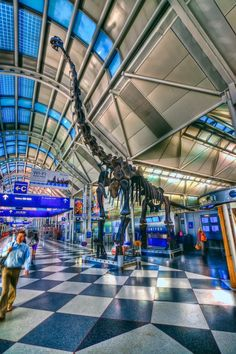 Brachiosaurus Dinosaur At Chicago OHare Airport Ohare Airport, Airport Design, Exhibition Building, Hdr Photography, My Kind Of Town, Water Slides, Patterns In Nature, Destinations, Wonderful Places