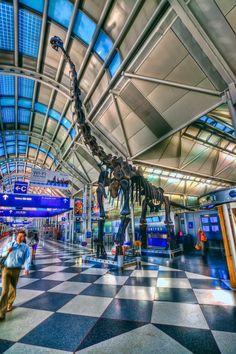 Brachiosaurus Dinosaur At OHare Airport
