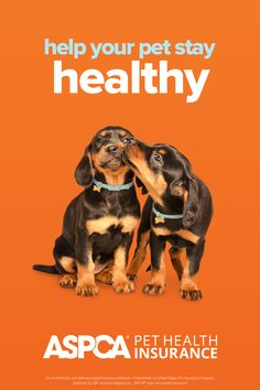 Every pet is unique, with their own personality and their own health needs. That's why ASPCA Pet Health Insurance plans are customizable. Return to your quote today to create a plan that's a perfect fit. Health Insurance Plans, Pet Insurance, Health Care Coverage, Be Yourself Quotes, How To Stay Healthy, Perfect Fit, Dog Cat, Personality, Pets