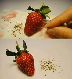 Saving seeds from strawberry to replant. OMG i am a dork.... so easy ?????