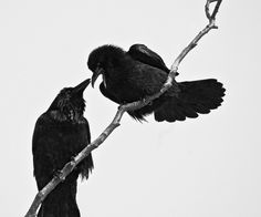   two crows, one means love, one means lost, together they are a reminder of my…