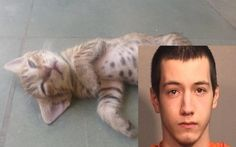 View the latest petition signatures for 18-Year-Old Crushes Kitten With Bare Hands, Threatens To Destroy Another! Demand The Maximum Penalty!