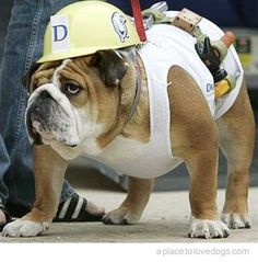 Call the Village People - we have a Construction Bully to add to the act !