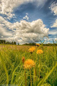 paseo por las nubes.campo