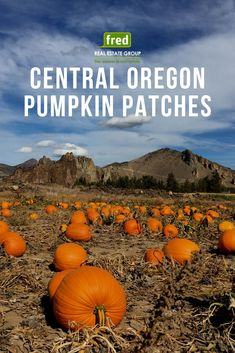 When October rolls around, a trip to the pumpkin patch in Central Oregon truly rocks. Oregon Falls, Bend, Central Oregon, Oregon Washington, Oregon Tattoo, Pacific Crest Trail, Pacific Coast, Oregon Hotels