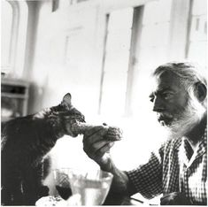Hemingway & cat