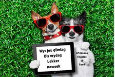 couple of dogs in love very close together lying on grass holding a blank and empty tablet pc or touchpad as a banner Poster. Love Posters, Buy Posters, Le Net, Couples In Love, Dog Love, Terrier, Puppies, Pets, Body