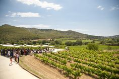 Ceremonia entre viñedos Vineyard, Outdoor, 15th Century, Outdoors, Vine Yard, Vineyard Vines, Outdoor Games, The Great Outdoors