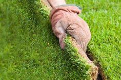 Laying lawn turf (step-by-step) | gardenersworld.com