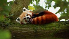 Exotic Animals (1366X768)